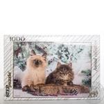 Пазли Step Puzzle Кішки 1000ел арт.79089