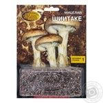 Mycelium shiitake grain 250ml