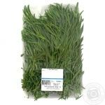 Greens tarragon fresh