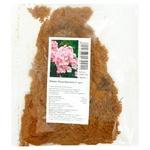 Rhizome Phlox Rosa Pastell