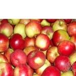 Фрукт яблука свіжа Польща
