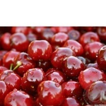 Fruit bing cherry fresh