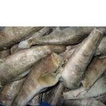 Рыба нототения замороженная