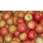 Фрукт яблука чемпіон свіжа
