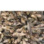 Fish gobies Amstor sun dried