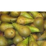 Фрукт груша зеленый свежая