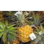 Фрукт ананас свіжа