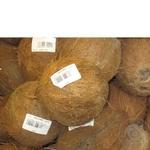 Фрукт кокос Экзотические фрукты свежая