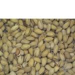 Snack pistachio Faeton salt