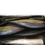 Fish atlantic mackerel Amstor light-salted