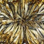 Риба салака Шельф холодного копчення