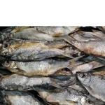 Fish common roach Shelf sun dried