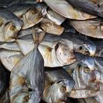 Fish vomer Shelf sun dried