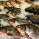 Риба карась свіжа