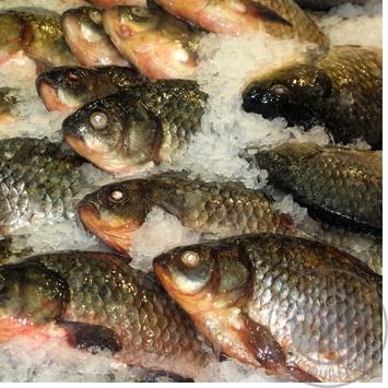 Рыба карась свежая