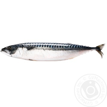 Скумбрия атлантическая 300-500 замороженная весовая