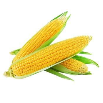 Кукурудза 1шт - купити, ціни на Метро - фото 1