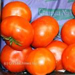 Овощи помидор свежая Испания