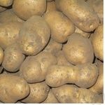 Овочі картопля біле свіжа Україна