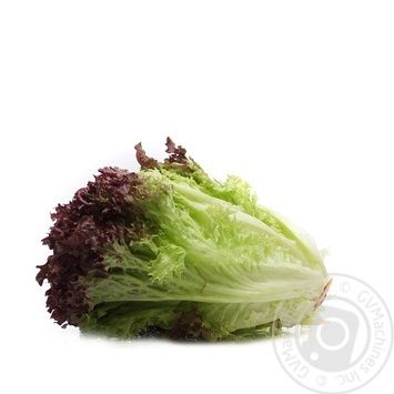 фото салата лолла росса