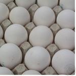 Яйцо куриное С1 (цвет товара на фото может отличаться от цвета товара на полке)