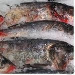 Fish silver carp live Ukraine