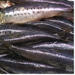 Fish herring light-salted