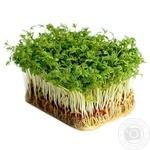 Мікрозелень кинзы Зеленый Дом 50г - купить, цены на Novus - фото 1