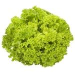 Lollo Biondo Green Salad
