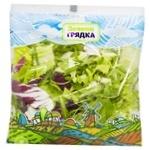 Greens lettuce Zelena hriadka Mix fresh Ukraine