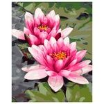 Pink Water Lily Set for Painting by Numbers 40x50cm