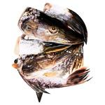 Рибні відходи щуки (ваг)