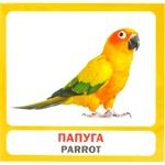 Набор карточек Сова Птицы
