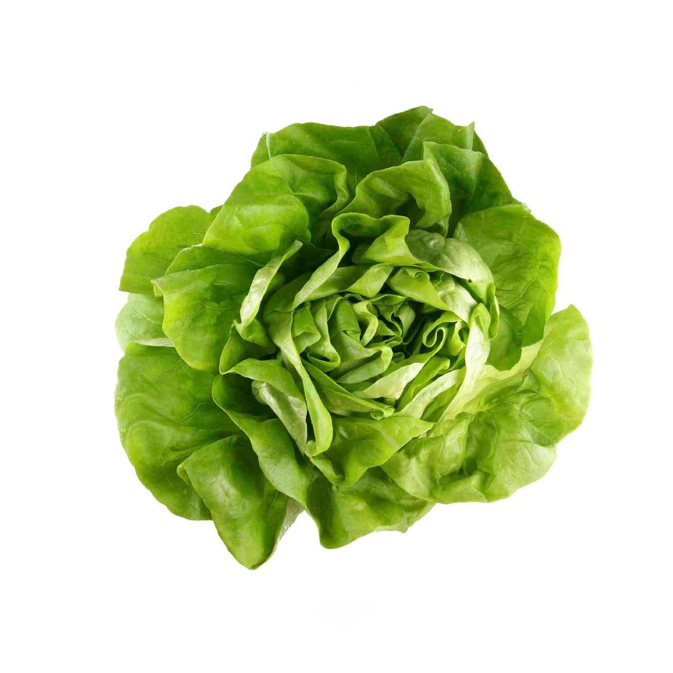 Lettuce Food Delivery