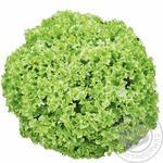 Зелень салат лолло біондо свіжа