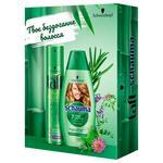 Schauma Hair Shampoo 400ml + Taft Hair Laquer 250ml Gift Set