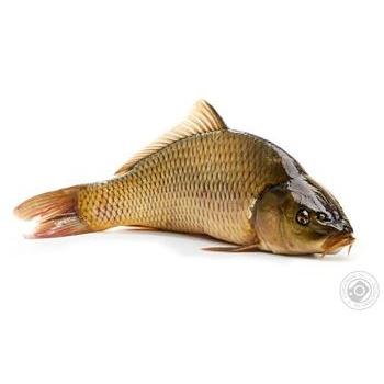 Fish carp live Ukraine - buy, prices for Furshet - image 1