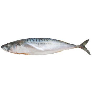 Fish atlantic mackerel frozen