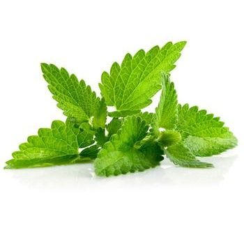 Greens mint fresh Ukraine