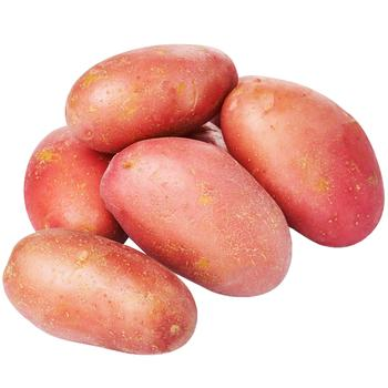 First Grade Young Pink Potato by Weight