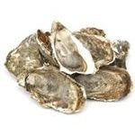 Seafood ostreidae fresh