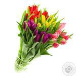 Тюльпан 1 шт, кольорова гама 8-12