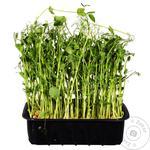 Microgreen Peas Portion Of Health
