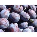 Blue-black plum