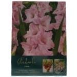 Луковица Гладиолус Grandiflorus Pink шт
