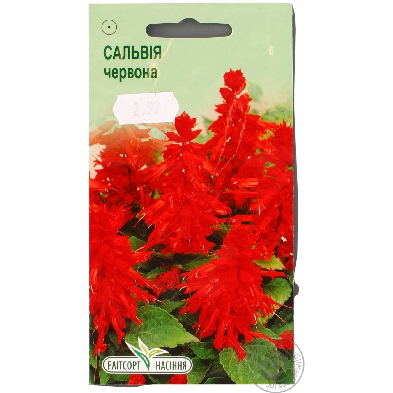 Насіння Елітсортнасіння Квіти Сальвія блискуча червона 0 d51fd4d382ef8